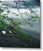 Dogwoods And Merced River Metal Print