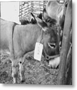 Donkey For Sale Metal Print