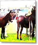 Donkeys At Mullaghmore Metal Print
