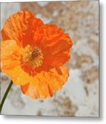 Doorway Poppy Metal Print