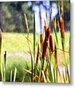Dragon Fly And Cattails In Watercolor Metal Print