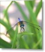 Dragon Fly Personality Metal Print by Debbie May