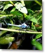 Dragonfly 9 Metal Print