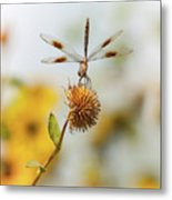 Dragonfly On Dead Bud Metal Print