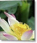 Dragonfly On Lotus Metal Print