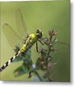 Dragonfly Rest Metal Print