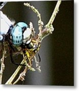 Dragonfly With Yellowjacket 2 Metal Print