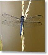 Dragonfly2 Metal Print