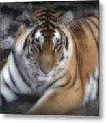 Dreamy Tiger Metal Print