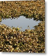 Dried Leaves In A Pond Metal Print