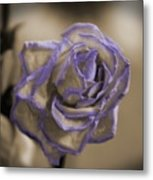 Dried Rose In Sienna And Ultra Violet Metal Print