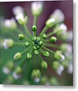 Drop Of Life Metal Print