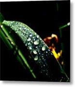 Droplets Of Water Metal Print