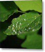 Droplets On A Leaf  Metal Print