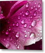 Droplets On Peony 1 Metal Print