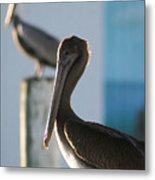 Dual Pelicans Metal Print