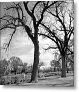 Duck Pond In March Metal Print