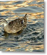 Duck Tracy Metal Print