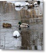 Ducks In Winter Metal Print