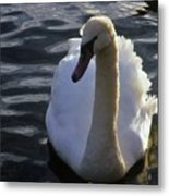 Duddingston Swan 13 Metal Print