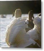 Duddingston Swan 16 Metal Print