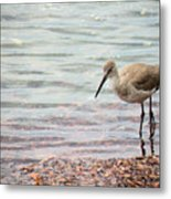Dunlin And The Green Sea Metal Print