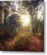 Dunmore Wood - Autumnal Morning Metal Print