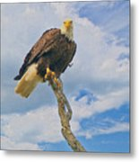 Eagle Eyes Metal Print