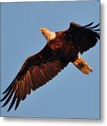 Eagle Over The Fox Metal Print