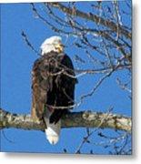 Eagle Watch Metal Print