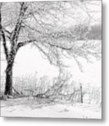 Early Frost Metal Print