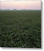 Early Morning Mist Over Soybean Fields Metal Print by Brian Gordon Green