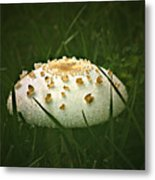 Early Morning Mushroom Metal Print