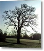 Early Morning Tree In Winter Metal Print