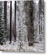 Early Winter Metal Print