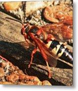 Eastern Cicada Killer Wasp Metal Print