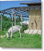 Ecological Farm Metal Print