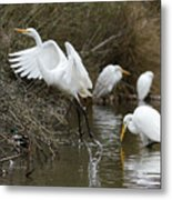 Egret Exit Metal Print by George Randy Bass