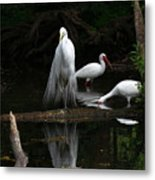 Egret Reflection Metal Print