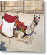 Egypt - Camel Metal Print