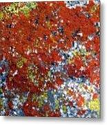Elegant Sunburst Lichen Metal Print