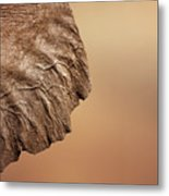 Elephant Ear Close-up Metal Print