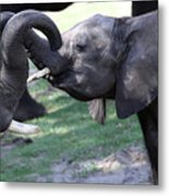 Elephant Greeting II Metal Print