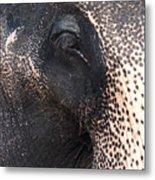 Elephant Metal Print by Jane Rix