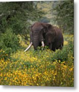 Elephant Of The Crater Metal Print