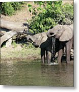 Elephants Drinking In Sinc Metal Print