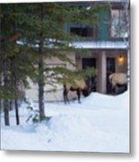 Elk Come Calling Metal Print