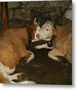European Cows Metal Print