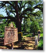 Evangeline Oak St Martinville Louisiana Metal Print