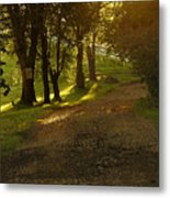 Evening Path Metal Print